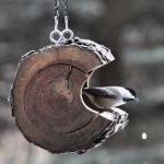 vogelhuisje Bert&Katelijne